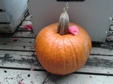 Pumpkin in front of white crate
