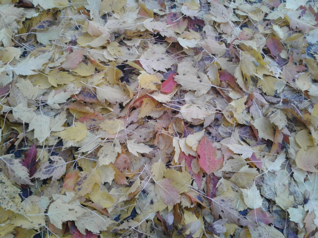 Fall leaves in yellow, orange and red on the ground